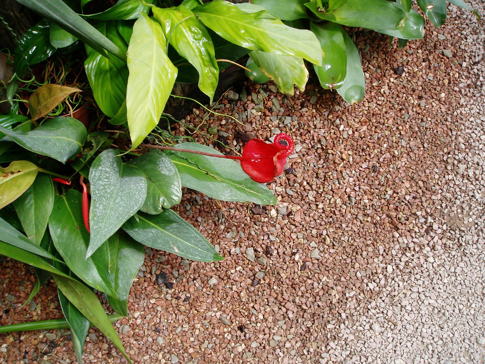 Выставка Орхидей B6adf865d82b