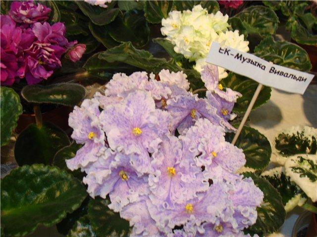 Международая выставка «Цветы.Ландшафт .Усадьба 2010» Астана - Страница 2 31c4dc374795