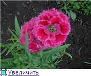 Лето в наших садах - Страница 7 1d2a57eb976et