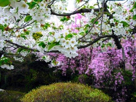 Красивые пейзажы Японии Dd5bd9f14631