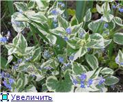Растения для тени или Тенистый сад. 6343f24d1c9at