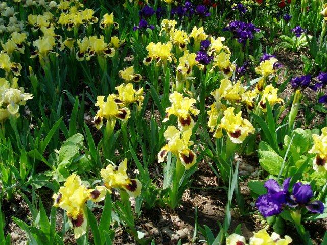 Крым. Никитский ботанический сад. C0a589621562