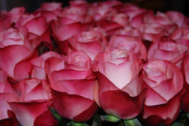 Международая выставка «Цветы.Ландшафт .Усадьба 2010» Астана - Страница 4 2637f77d3fc6