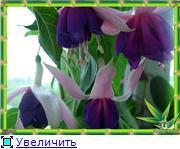 ФУКСИИ В ХАБАРОВСКЕ  - Страница 2 3354bcd9d922t