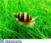 Улитки Хелены 29f0a7992f84t