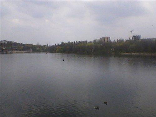 Донецкий край A417bb49034a