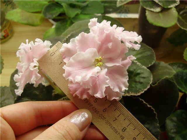 Розовая Акварель (Морев) Dd830588ac62