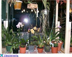 Размещение орхидей B2aa0a78958ft