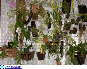 Размещение орхидей D5d8baebbd00t
