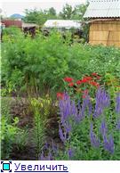 Лето в наших садах - Страница 6 B2f762506d7bt