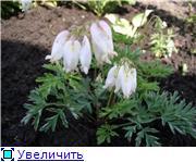 Лето в наших садах - Страница 2 34806bd39aa0t