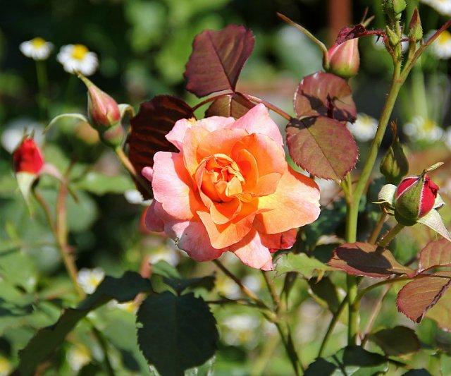 Экскурсия по Ботаническому Саду D25e07ded8ff