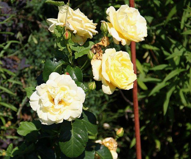 Экскурсия по Ботаническому Саду 7e7425f4f8b9
