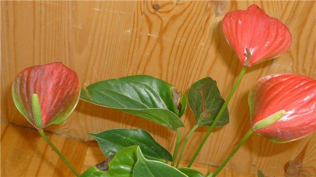 Мои любимые цветочки - Страница 39 185e15493b19