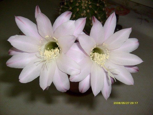 Цветики-цветочки разные 16cfb29ffcab