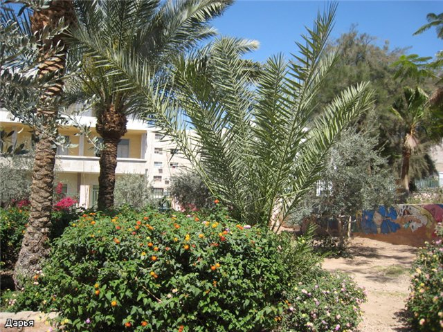 Иордания. Акаба 0d27f57505ec
