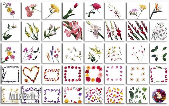 Клипарты  ::  Цветы-разные 4479d3b460ee