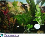 Мои аквариумы. C688683f164dt