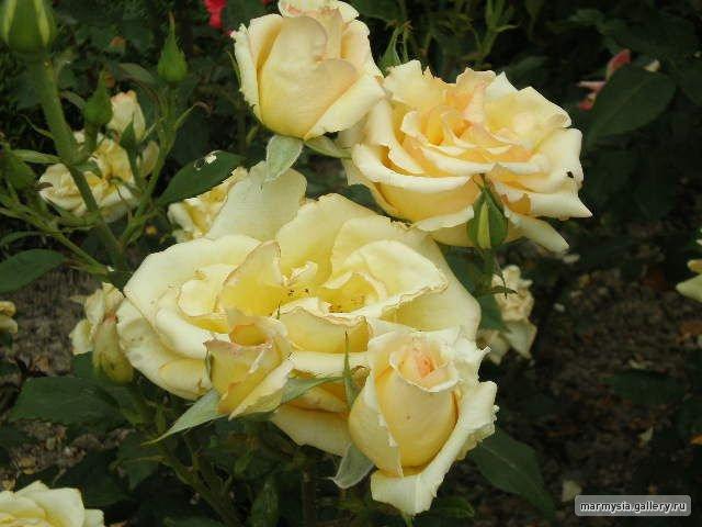 Крым. Никитский ботанический сад. 4059c68abe98