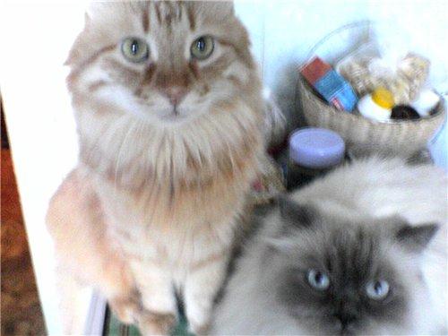 Наши домашние животные B58b092a332e