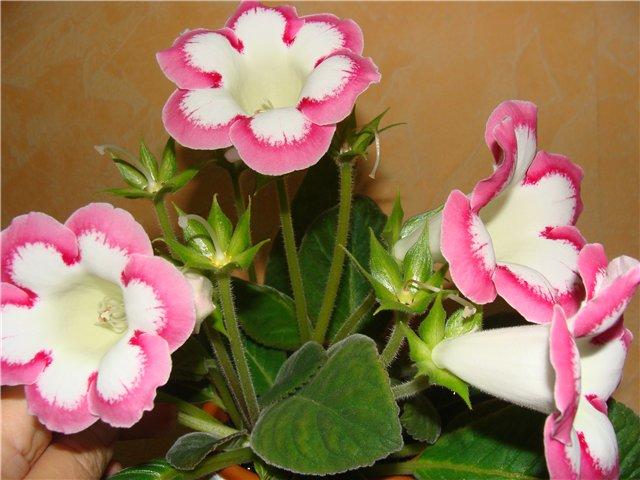 Весеннее  цветение (Хваст от Веры) - Страница 5 E3d10c6c0eeb