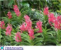 Парк орхидей в Ботаническом саду Сингапура. Bc3e98c99cfat