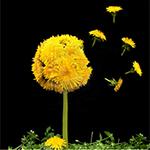 Аватары с цветами - Страница 2 Cd28413c744c