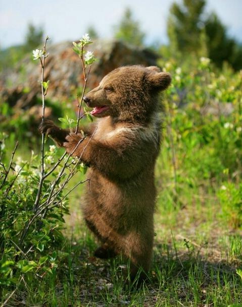 Ничто человеческое медведям не чуждо 19ab85f6fd8a