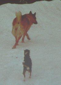 Диалог с собакой: сигналы примирения 1c509c8f10af