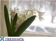 Весна идет, весне дорогу! 335fcc3c28f6t