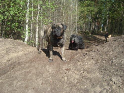 Наши собаки, друзья и гости, кот Мензурка 3892cb83e3f3