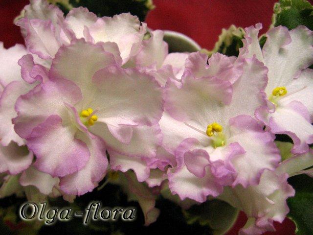 Enchanted April (S. Sorano)  - Страница 2 880d45fea2b4