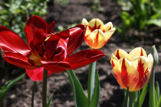 Растения от FILIGERa - Страница 2 9ed9576c5d44