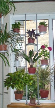 Дополнительное место для растений. 4f0f7ac303ba