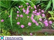 Растения для альпийской горки. Fa0f1d7843cct