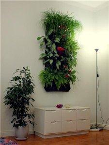 Вертикальное озеленение 07df9d2d9d1e