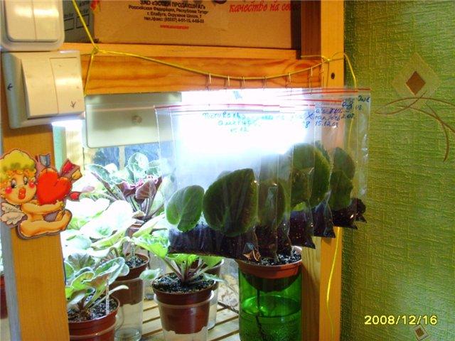 Урок 1. Вегетативное размножение сенполии, листовым черенком. - Страница 2 40b860f6221c