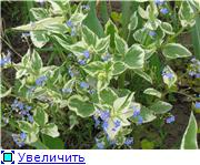 Растения для тени или Тенистый сад. C6bde028b3aet