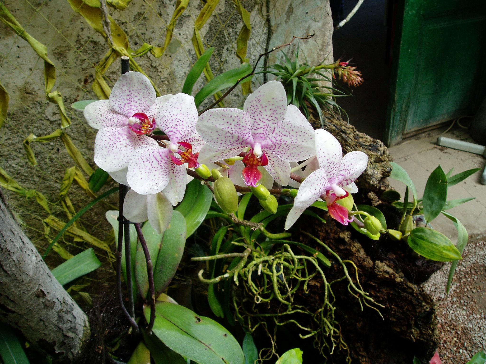 Выставка Орхидей 956dd162bbba