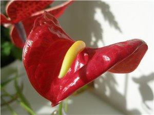 Цветочные красотки и красавцы Идущей Босиком - Страница 2 88c0b9cecb81