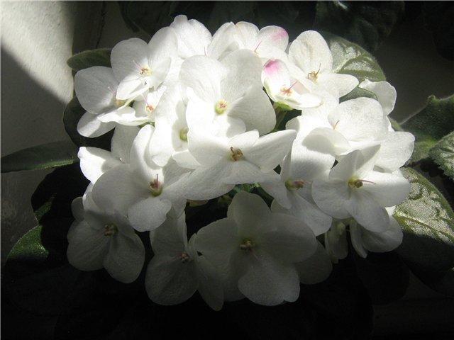 Моё цветочное богатство - Страница 20 691489387585