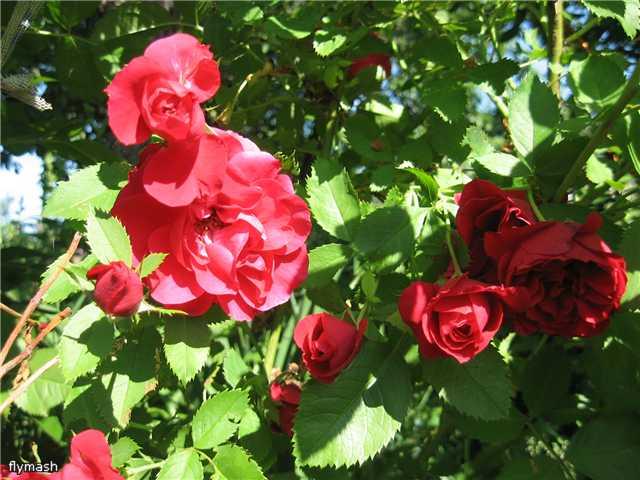 Во саду ли, в огороде... - Страница 2 Ab46c5201dde