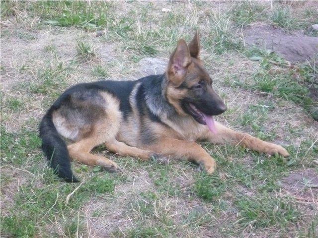 Моя первая собака. 8aa5c49f6870