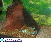 Мой аквариум 88a3aa17c5c2t