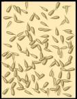 BARKINGHEADS Db990bd0662f