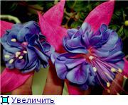 ФУКСИИ В ХАБАРОВСКЕ  - Страница 11 83ee7df3af29t