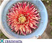 Лето в наших садах - Страница 7 2551ab231e0at
