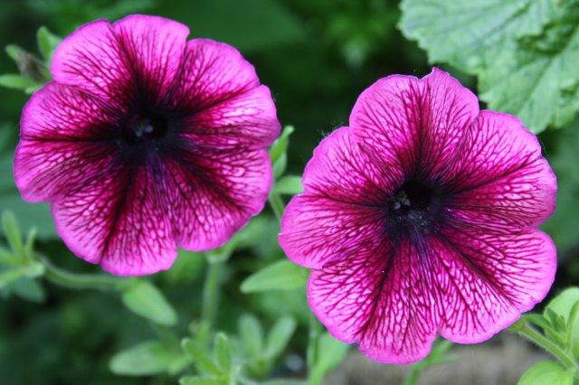 Однолетние растения 39391a76ed2f