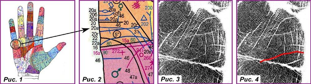 Основные, второстепенные, редкие линии и знаки 58395570048c