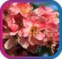 продам семена экзотических растений - Страница 3 B1c12ce11510